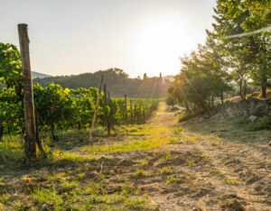Rent a Car and Visit the Best Wine Regions in Italy